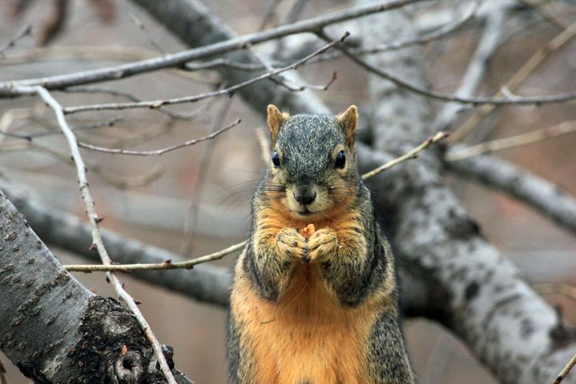 mókus eszik tél