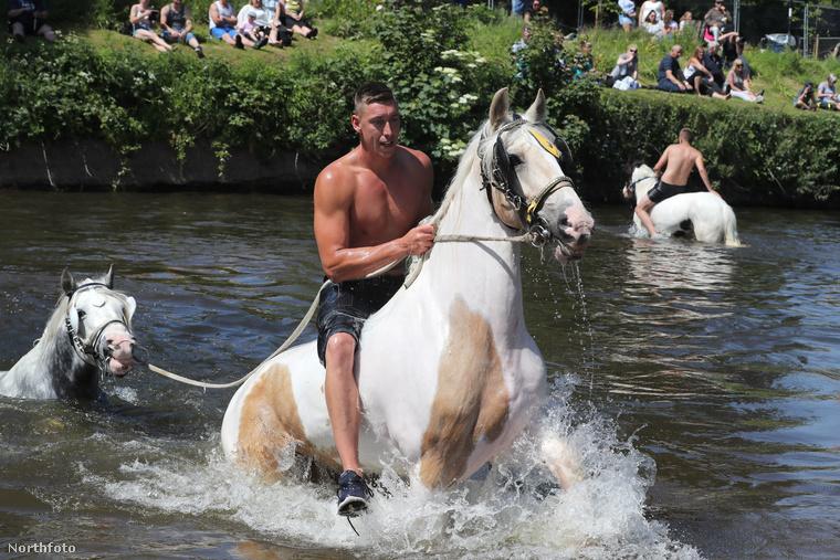 Angliában egy Appleby nevű településnél éppen lovakat fürdetnek az évi rendes lóvásár előtt
