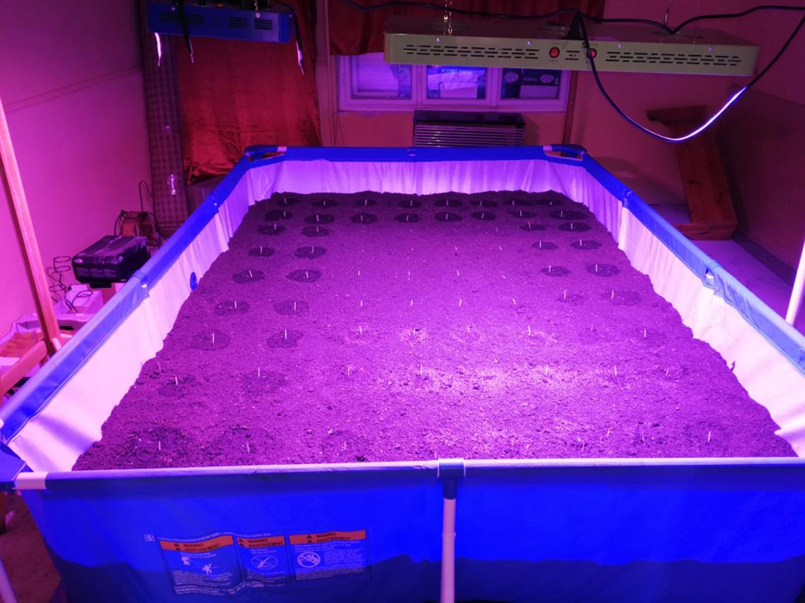 Hódmezővásárhely mindig híres volt a mezőgazdaságáról. A fotó tanúsága szerint a környéken a legújabb technológiák alkalmazásában is jeleskednek, és nem szenvednek hiányt a híres, magyar leleményben. Egy helyi, 28 éves marihuánatermesztő otthonában 150 tő illegális növényt találtak, valamint ezt a fémvázas, kerti medencét, amit nem ám pancsolás miatt szerzett be, hanem hogy ebben UV-zza a nagy melegigényű palántákat. Nem kis munka lehetett telehordani földdel, többet valószínűleg nem csinál ilyet.