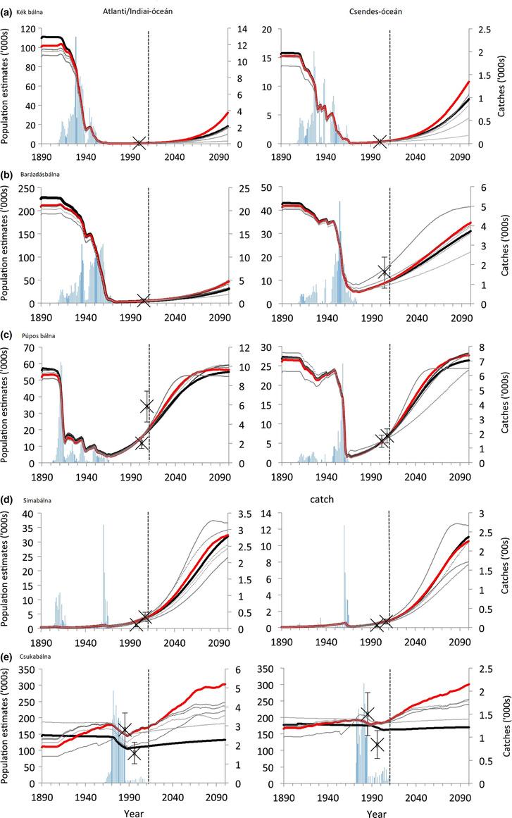 Bálnapopulációk a múltban, most és a jövőben. Becslések: Tulloch et al. 2017.