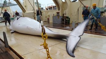 Miért ölik a bálnákat a japánok?