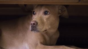 Így segíts a kutyádnak túlélni a szilvesztert