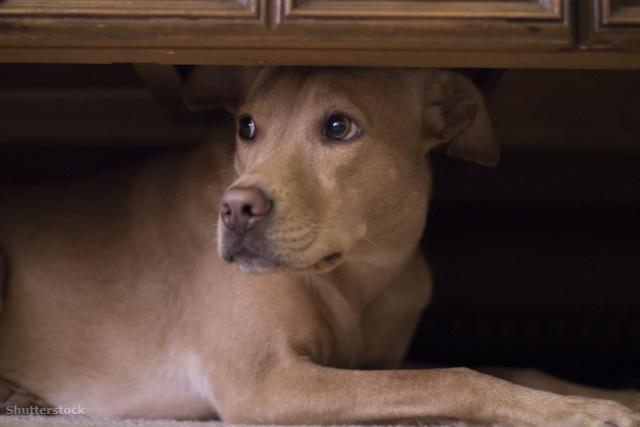 szeretem a kutyákat mi a törvény a 18 éven aluli randevúról?