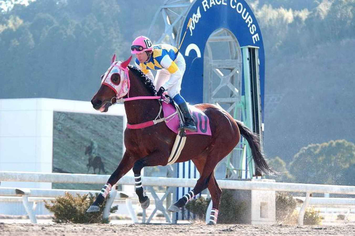 Haru-Urara-plods-her-heart-out-at-Kochi-Racecourse-1463728341 13