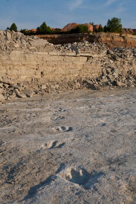 Az Acrocanthosaurus atokensis megkövült lábnyomai