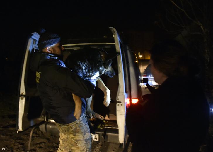 Az Állatmentő Szolgálat Alapítvány alapítója, Somogyi Zoltán egy petárdáktól megriadt, elszökött kutyát szállít vissza gazdájának a főváros XXII. kerületében 2017. január 1-jére virradó éjjel.