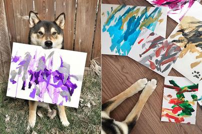 festo kutya 3
