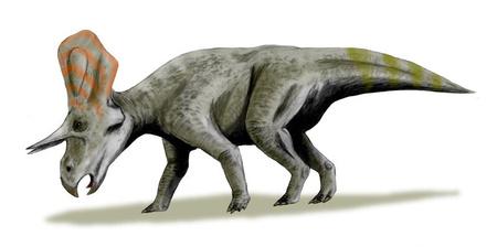 Így nézhetett ki a Zuniceratops (kép: Wikipedia)