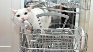 3 tipp, hogy hatékonyabban pakold ki a mosogatógépet