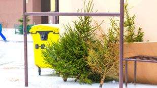 A kidobott karácsonyfákból festék és ételízesítő is lehet!