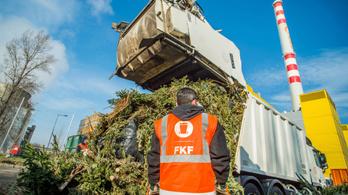 Hamarosan félmillió karácsonyfa fog égni