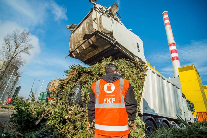 Begyűjtött, elégetésre váró karácsonyfákatat rakodnak le teherautóról a Fővárosi Közterület-fenntartó (FKF) Zrt. XV. kerületi Fővárosi Hulladékhasznosító Művének udvarán 2018. január 8-án.