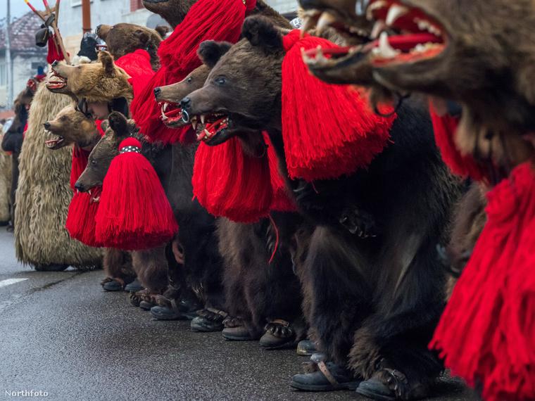 Annak idején, amikor ennek a népszokásnak a gyökerei kialakultak, a medvét szent állatként tisztelték.