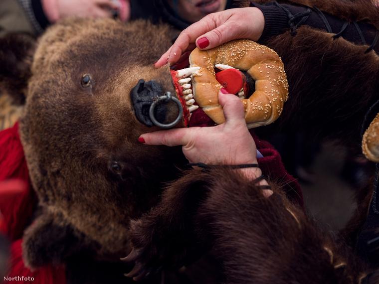 Ez a medve már nagyon éhes!