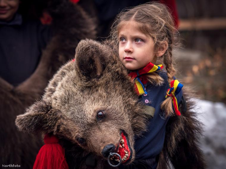 Állítólag az emberek valódi medvebőröket használnak a felvonuláshoz.