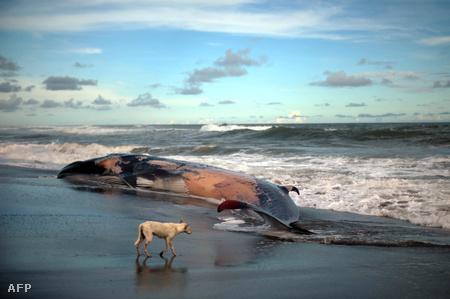 Elpusztult bálna San Salvadorban