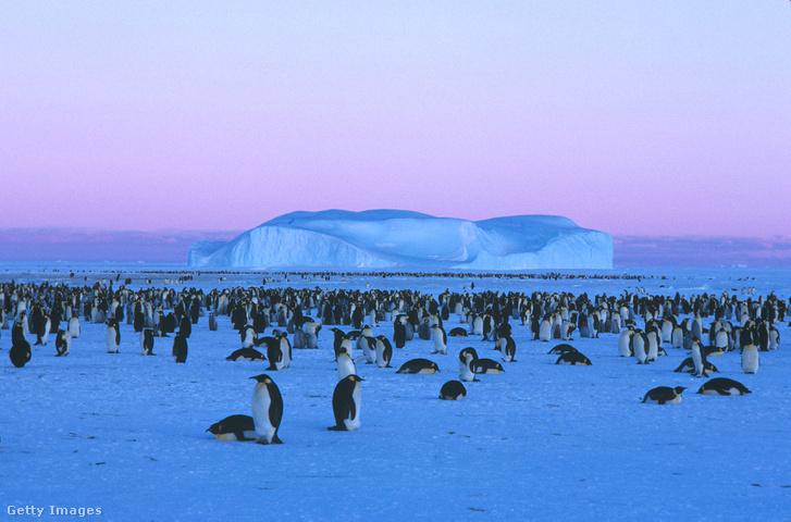 Császárpingvinek az Antarktiszon
