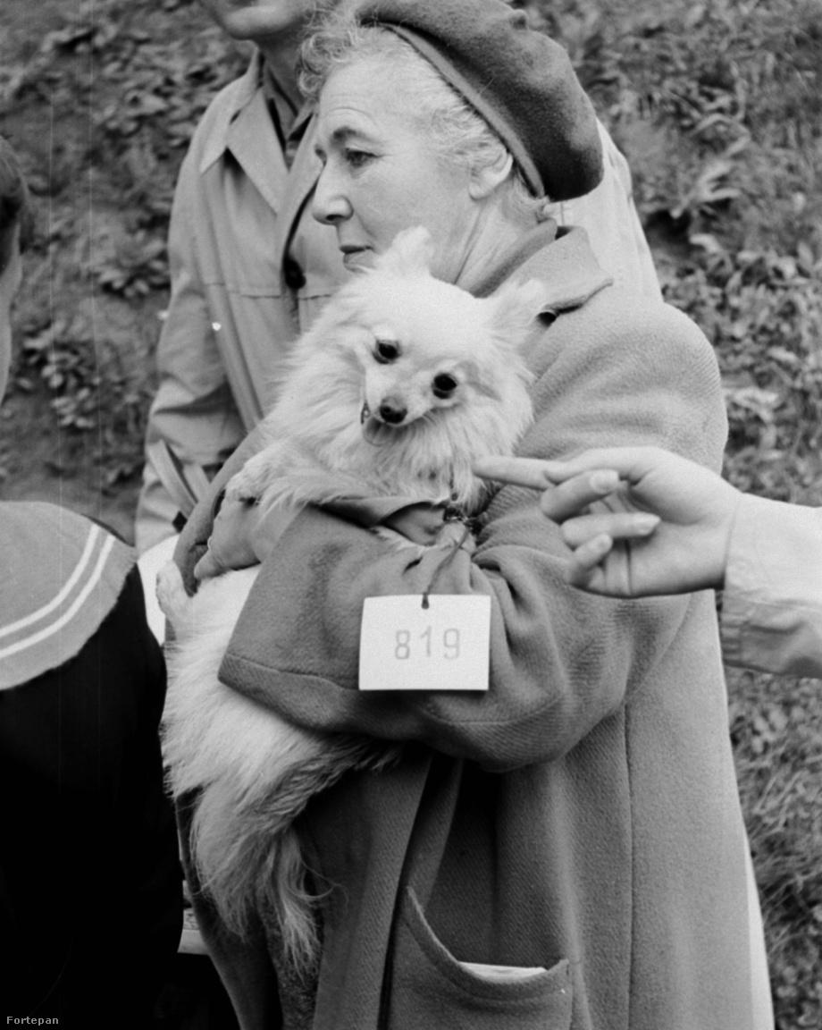 A fotó a magyar ebtenyésztők Országos Kutyakiállításán készült 1964-ben.