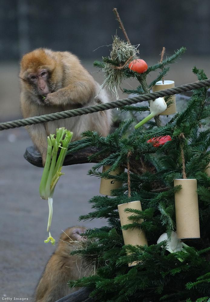 A majmok fája volt a legszebben feldíszítve, Youtube-videó is van róla.