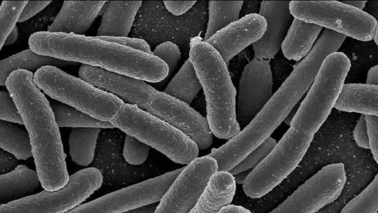 Piszkos drogok az immunrendszerben