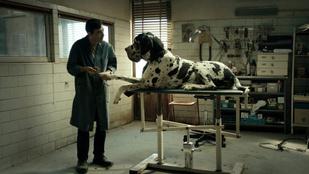 Az egyik legsúlyosabb olasz bűntény a vásznon is kemény - Kritika a Dogman című filmről