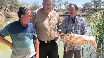 Milliónyi döglött hal miatt bűzlik két ausztrál folyópart
