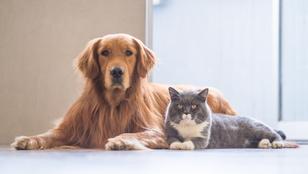 A kutyák vagy a macskák az okosabbak? Végre kiderült!