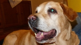 Miért zöld a kutyák szeme a fotókon?