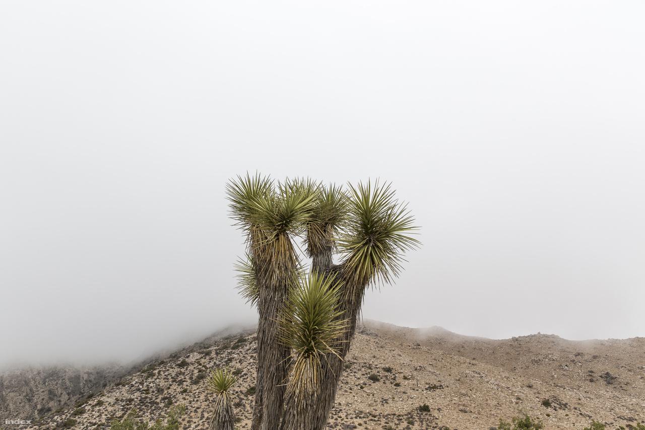 A sziklás, hegyes, sivatagos parkban változatos időjárási viszonyok uralkodnak részben attól is függően, hogy épp milyen tengerszint feletti magasságon járunk. Van, hogy hétágra süt a nap, majd pár perccel később a legördülő felhők teljesen eltakarják a hegygerinceket a szemünk elől, majd egy óra múlva ismét aranyszínben ragyog a táj.