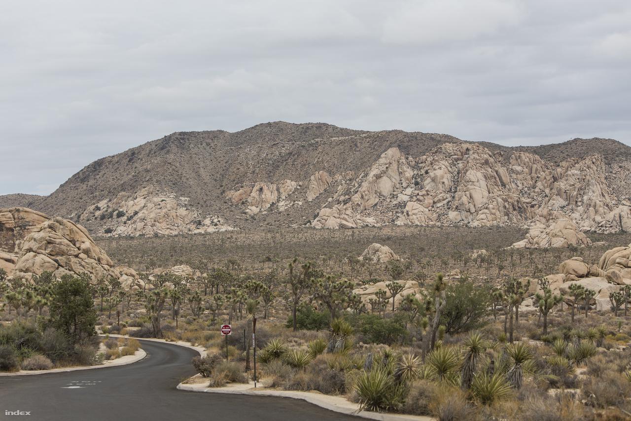 A Joshua Tree Nemzeti Parkban kiváló minőségű utakon lehet autózni, kiépített pihenőhelyek, parkolók, grillezőhelyek, táborhelyek állnak a túrázók rendelkezére.
