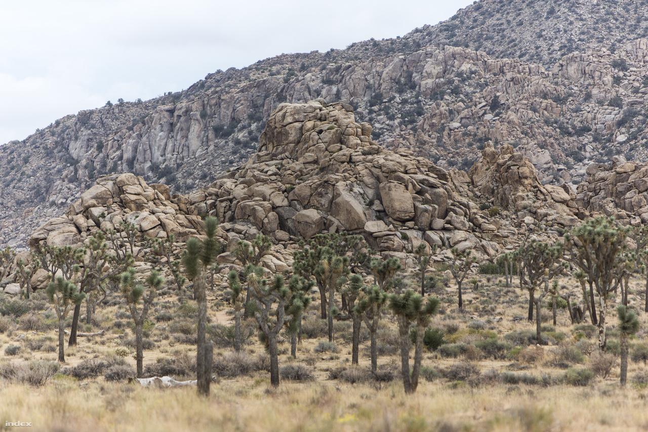 A park egyik fő jellegzetessége az egyedülálló geológiai arculat, a hatalmas, tördezett gránittömbök, amik a sivatagi erózió gyönyörű mementói. A másik a Mojave-sivatagban őshonos Joshua-fák (Yucca brevifolia), avagy Jozsué-pálmaliliomok vagy Jozsué-jukkák, amik ilyen nagy számban csak itt élnek, és amikről a park a nevét kapta.