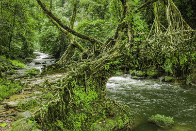 Riwai-elo-hid-Cherrapunjee-Meghalaya-India