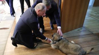 Putyin egy kutyát kapott ajándékba a szerb elnöktől