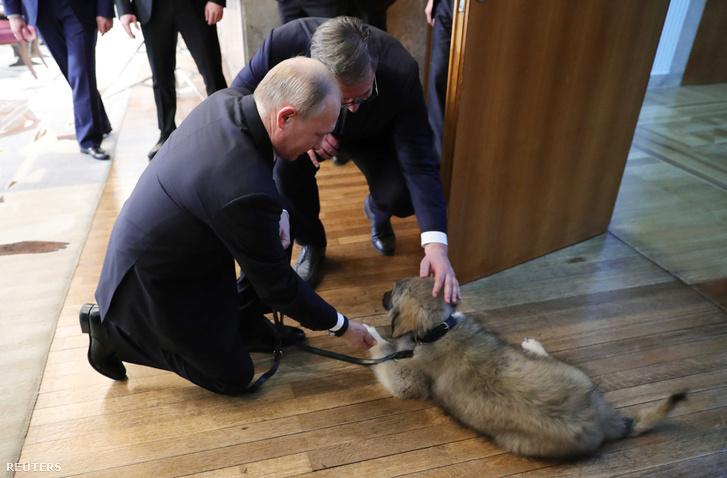 Putyin egy sárhegyi juhászkutyát kapott ajándékba Belgrádban.