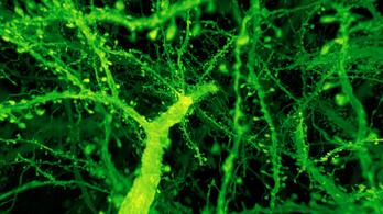 Sétát tehetünk egy muslica agyában
