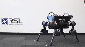 Simán talpra szökken a felrúgott robotkutya