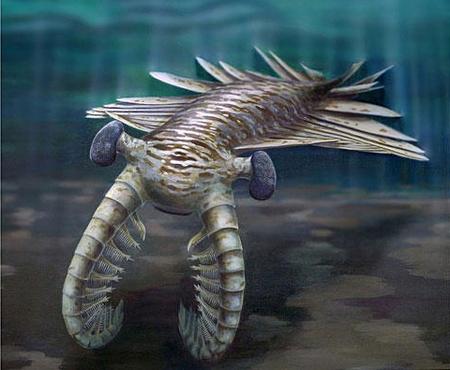 1208-Anomalocaris-cambrian-eyes full 600