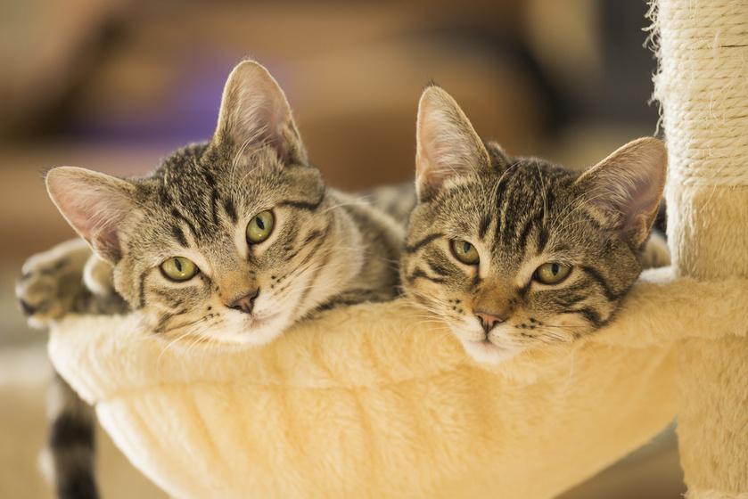 Kényelmes, puha pihenőhely a cica számára: csak egy régi létra kell hozzá