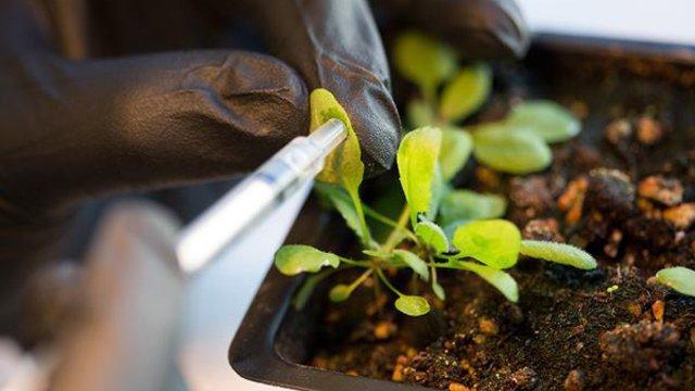 Nikkelt termő növények