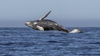 A bálnák nagyon örültek 9/11-nek