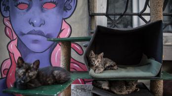 A macskák felismerik az ember hangulatát