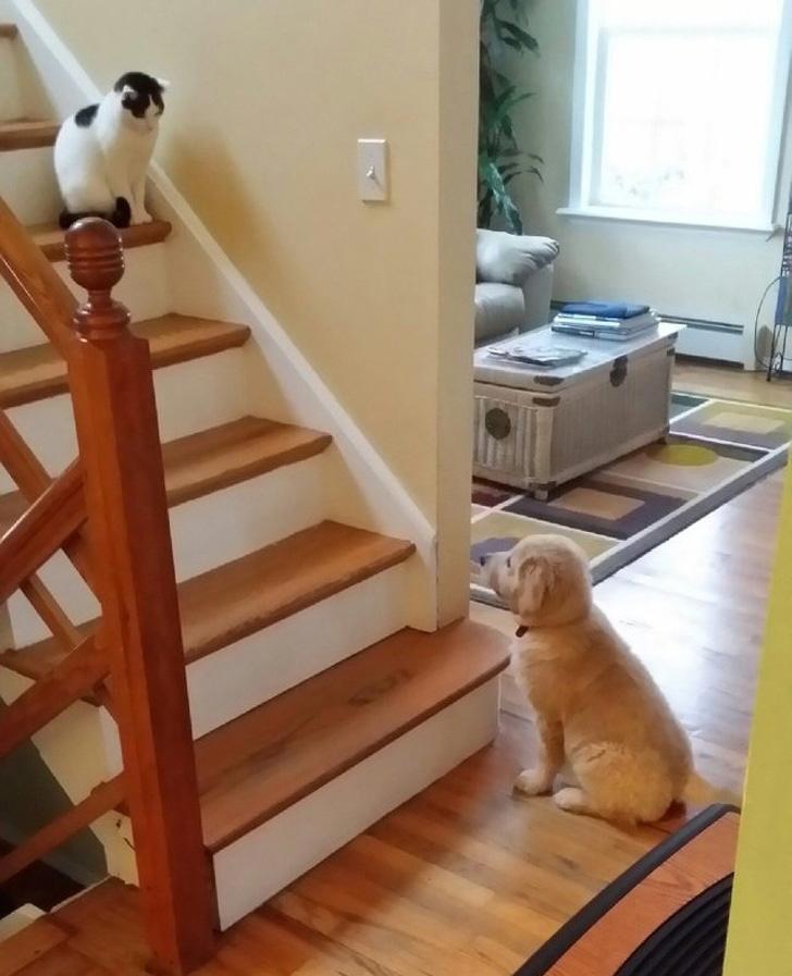 A cica nem örült az új családtagnak. Tartotta a kellő távolságot, és eldöntötte, hogy a kutya, bizony, nem mehet fel az emeletre, mert az az ő felségterülete.