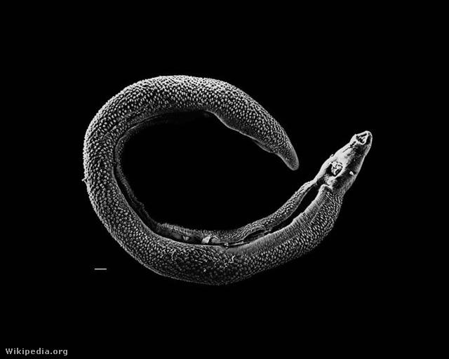 Paraziták rossz vicc, VICCEK L SZULTÁNNAL #6 kecske fereghajto injekcio