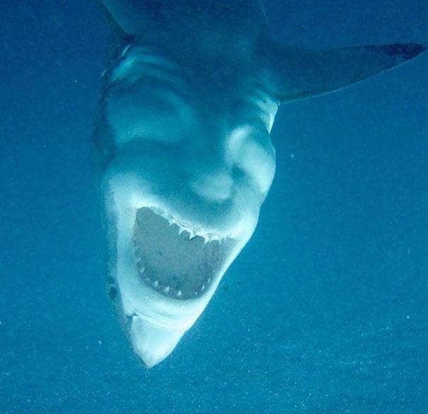 A cápa pattanásig feszült izmai egy ember arcát formázzák.