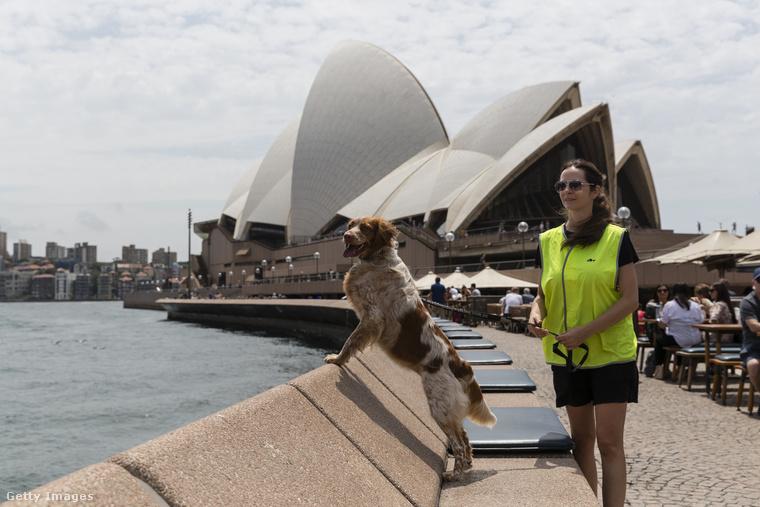 Ő Roxy, az egyik őrkutya, aki Sydney Operaháza előtt dolgozik, és a feladata a sirályok elkergetése.