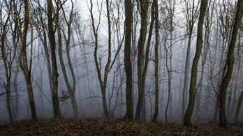 Az új magyar erdőtörvény segíti az erdőirtást