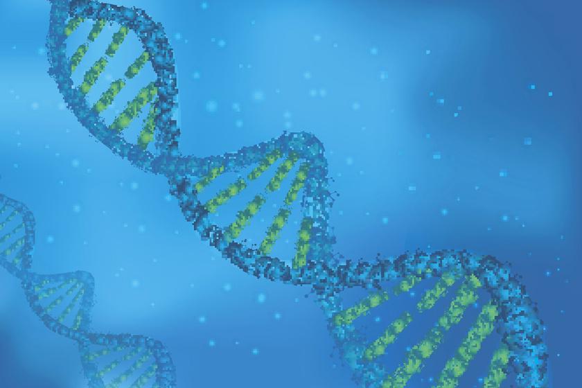 A géneknek igen komoly szerepük van abban, hogy valaki hízékony vagy sem. 18 genetikai marker játszhat szerepet az elhízás kialakulásában, és 13 másik, mely azt befolyásolja, az egyes embereknél a csípőre vagy a derékra rakódik a súly.