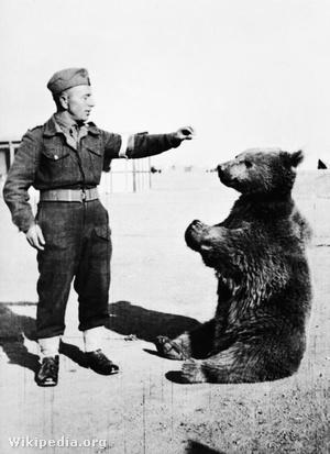 Wojtek a medve