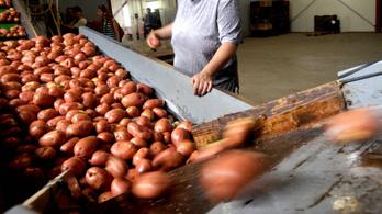 Így múlik el a magyar krumpli dicsősége