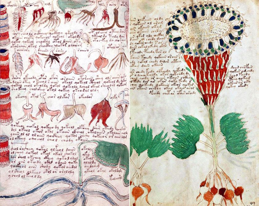 A rejtélyes Voynich kézirat